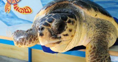 aloha tartaruga pescara
