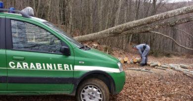 carabinieri furto legna