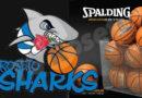 sharks-spalding