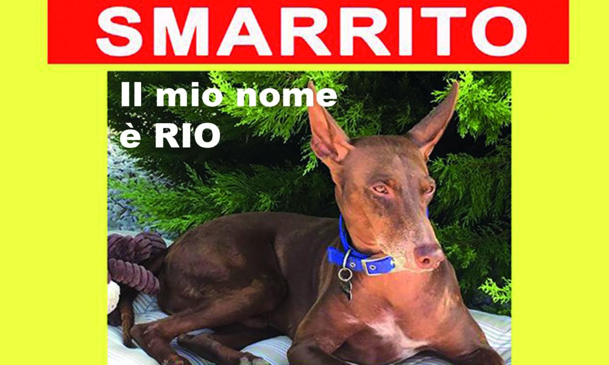 cane Rio